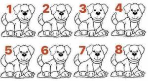 Welcher Hund ist anders?