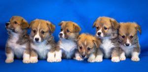 Vitamine und Mineralien in der Hundeernährung
